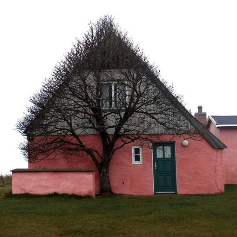 pink house with a tree forming its branches in the same shape of the house